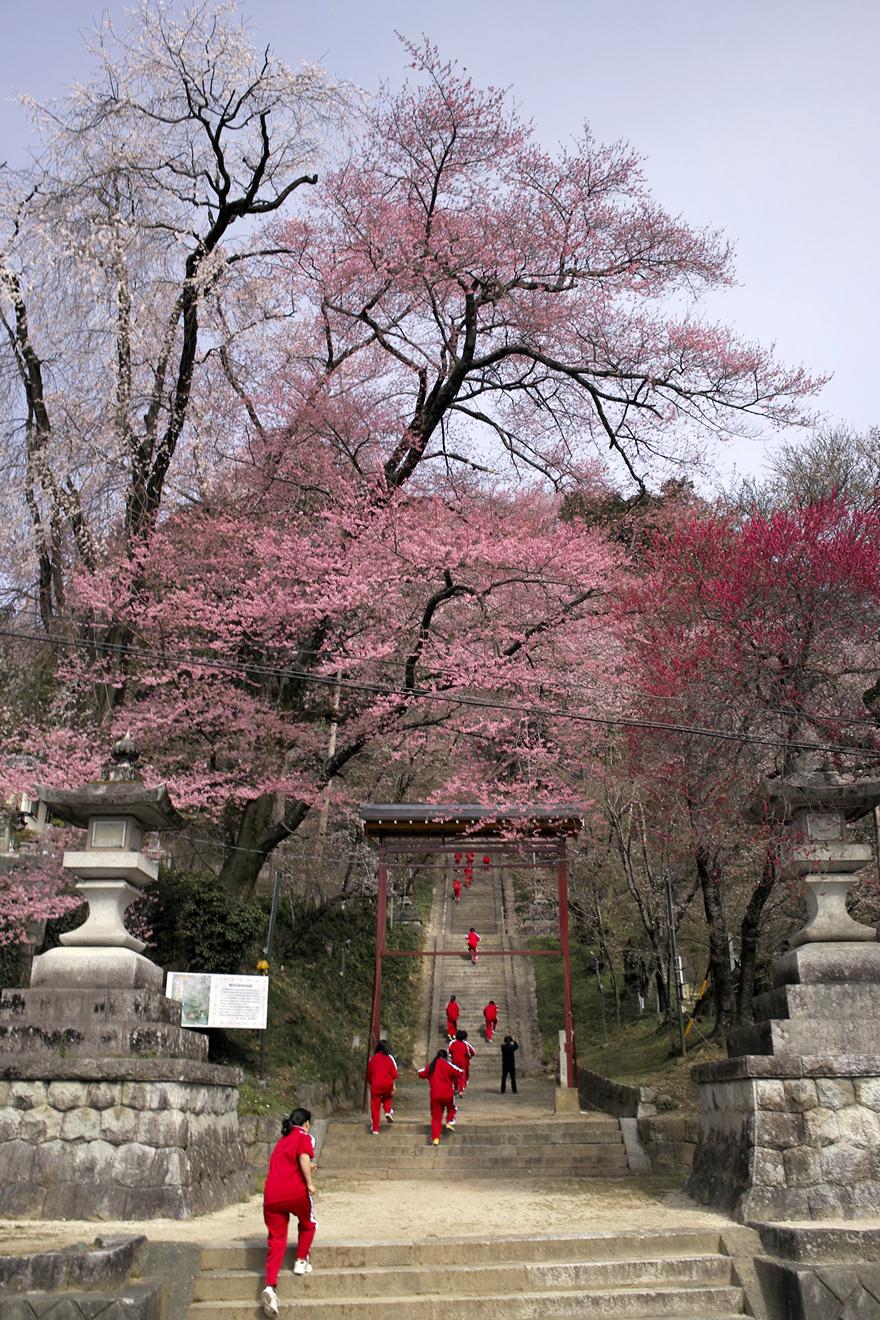 飯田市飯沼諏訪神社のエドヒガン