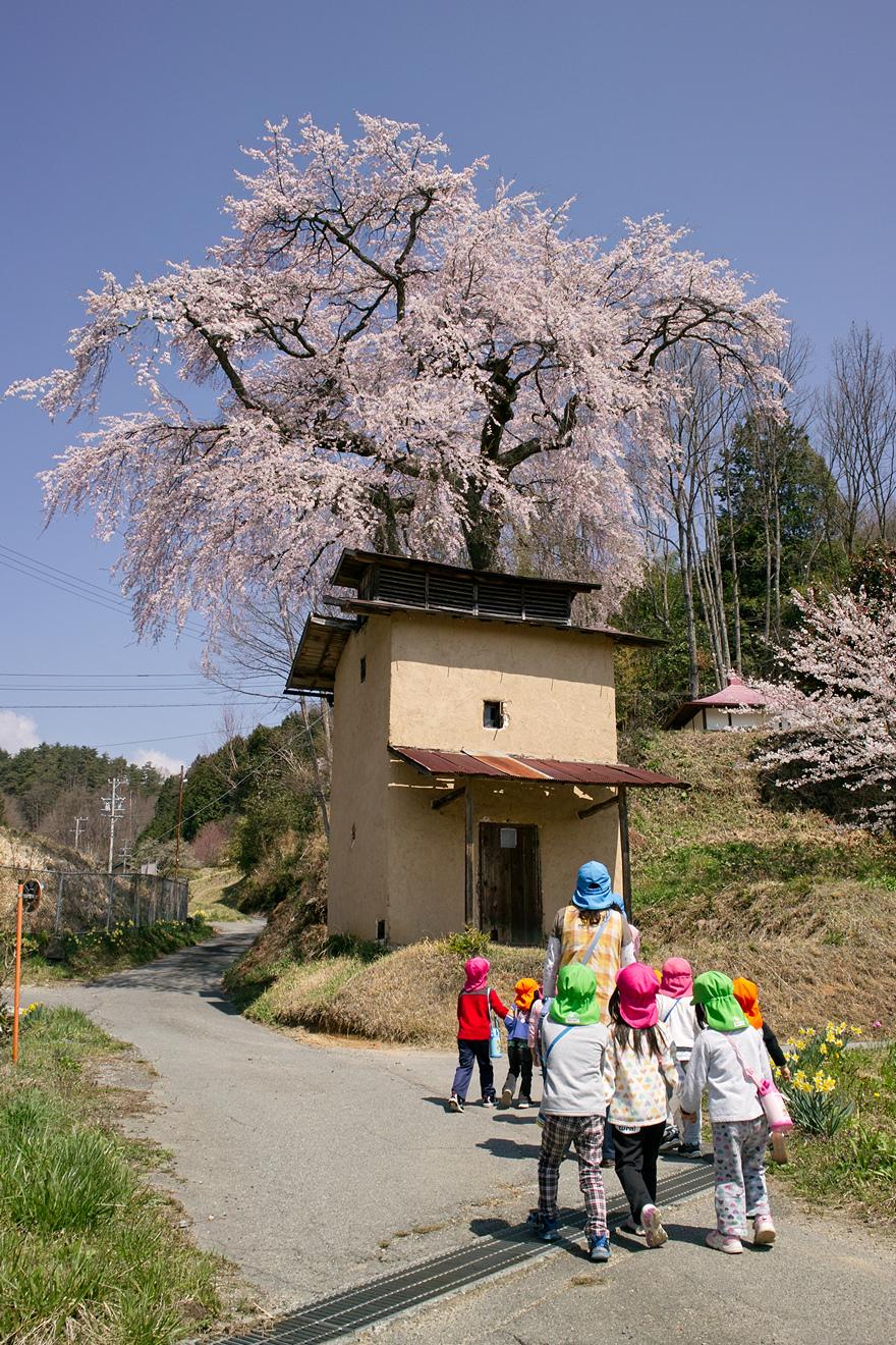 2012年4月18日飯田市久米「久米寺の枝垂桜」