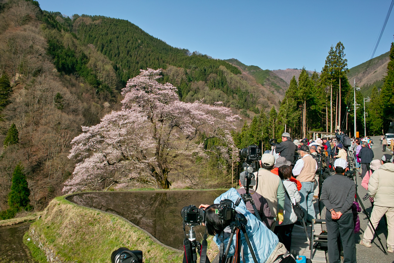 2012年4月29日長野県阿智村「駒つなぎの桜」