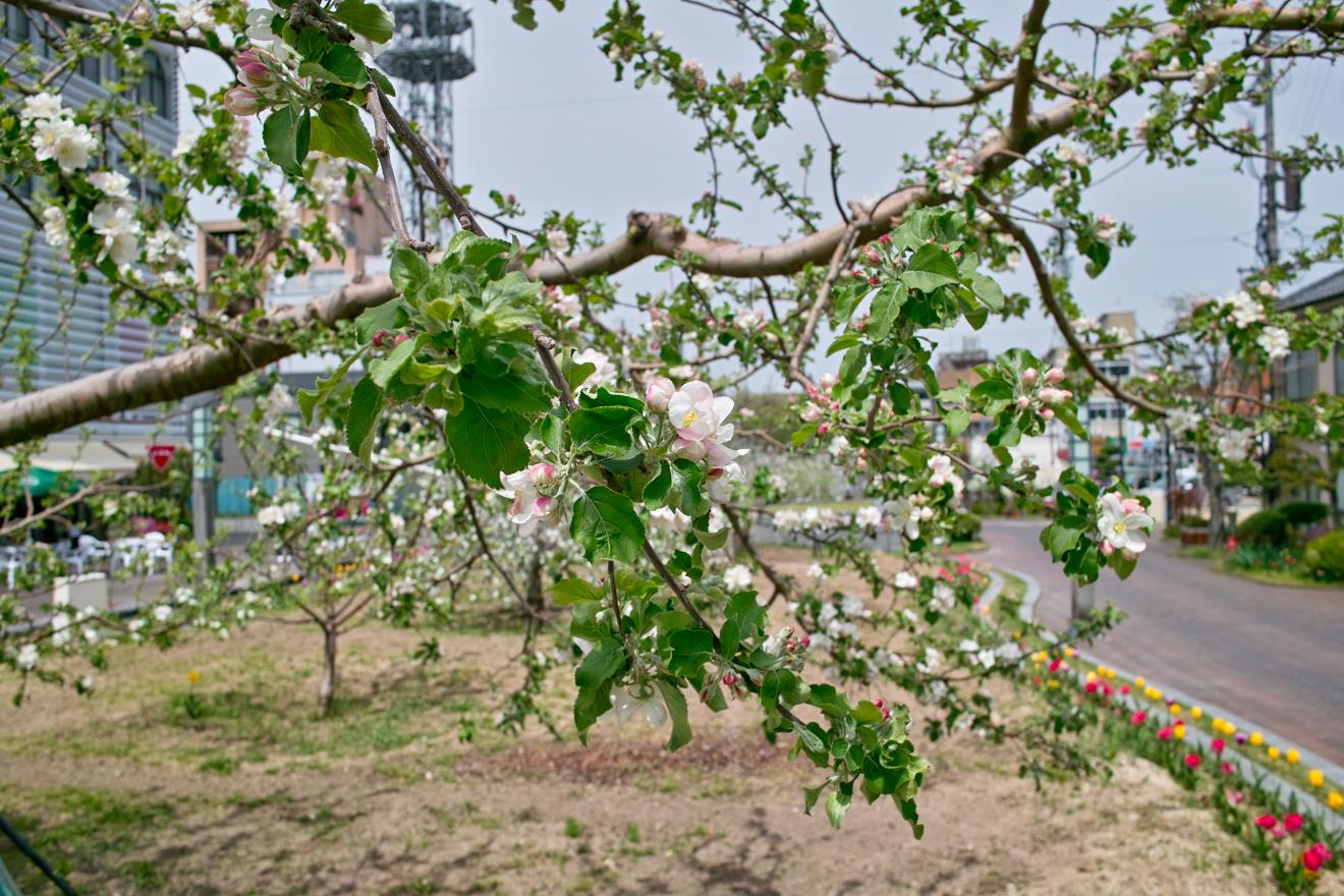 2012年4月29日長野県飯田市「りんご並木」