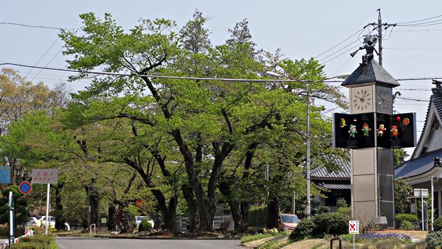 2014年4月26日:飯田市「さくら並木ハミングパル」