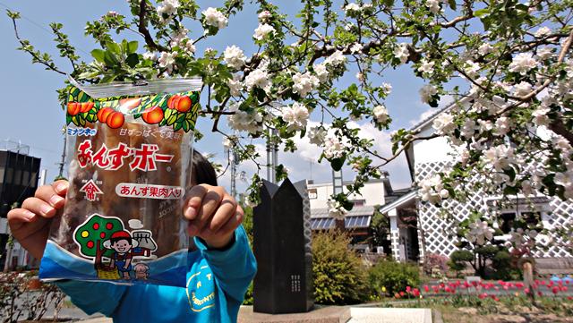 2014年4月26日:飯田市「りんご並木」で「あんずボー」