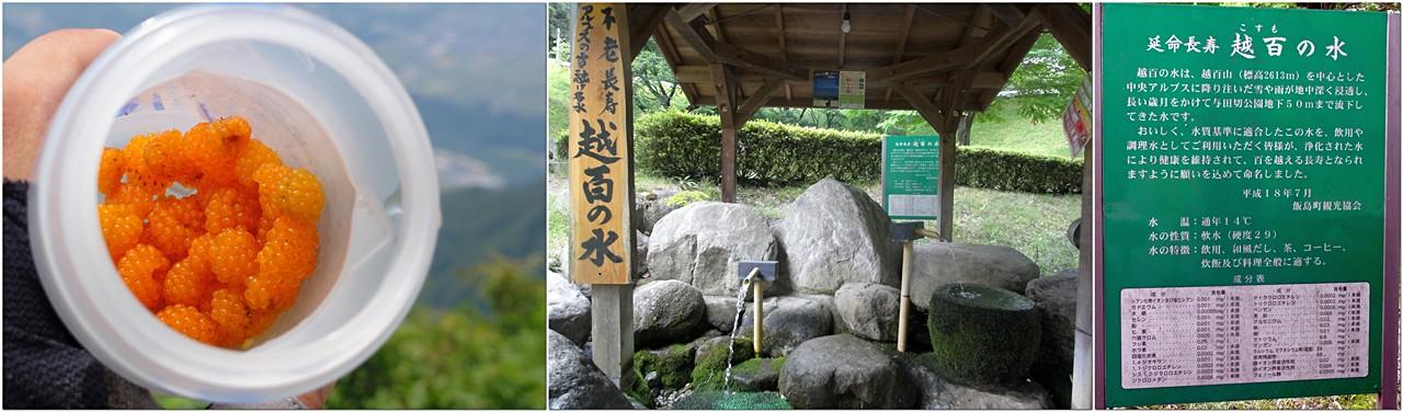 キイチゴと飯島町与田切公園の越百の水
